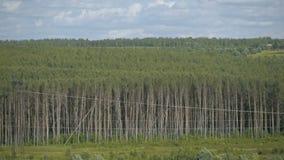 Красивая зеленая предпосылка природы леса сток-видео