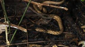 Красивая змейка, маленькая змейка на земле Стоковое Фото