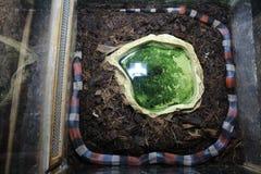 Красивая змейка Стоковые Фото