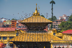 Красивая золотая крыша на виске Катманду Pashupatinath, Непале Стоковое фото RF