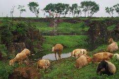Красивая индийская сцена обрабатываемой земли Стоковое Изображение
