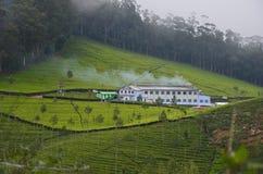 Красивая индийская фабрика чая Стоковые Изображения
