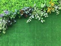 Красивая искусственная предпосылка стены завода Стоковое Фото