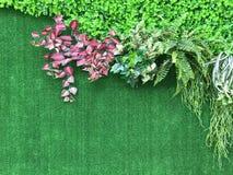 Красивая искусственная предпосылка стены завода Стоковые Изображения