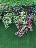 Красивая искусственная предпосылка стены завода Стоковое Изображение