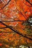 Красивая листва осени на Takao, Киото, Японии Стоковые Изображения