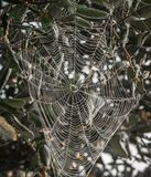 Красивая и затейливая вертикальная сеть паука Стоковая Фотография RF