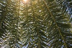 Красивая и романтичная тень разрешения ладони под светом восхода солнца Стоковая Фотография RF