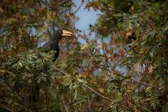 Красивая и coulourful птица в славной природе Стоковые Фотографии RF