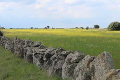 Красивая каменная стена которая отделяет поля и животные стоковая фотография