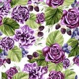 Красивая картина акварели с цветками подняла и ежевика, евкалипт выходит Стоковое Фото