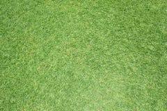 Красивая картина зеленой травы от поля для гольфа Стоковое Изображение