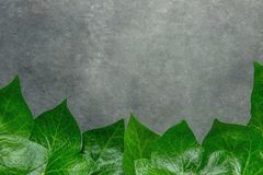 Красивая картина от свежих зеленых листьев плюща формируя границу рамки на темной каменной предпосылке Объявление карточки плакат Стоковые Фото
