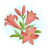 Красивая карточка подарка с оранжевыми лилиями Стоковые Изображения RF