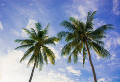 Красивая кокосовая пальма захода солнца на saphan челки, Таиланде Стоковая Фотография