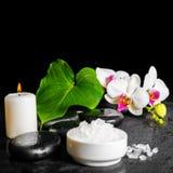 Красивая концепция белого цветка орхидеи, фаленопсис курорта, gree Стоковые Изображения RF