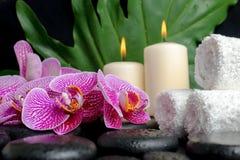Красивая концепция камней Дзэн с падениями, зацветая хворостина курорта Стоковые Фотографии RF