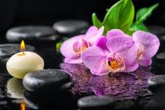 Красивая концепция курорта зацветая цветка орхидеи сирени хворостины, Стоковые Фотографии RF