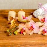Красивая концепция курорта зацветая цветка орхидеи хворостины, phalaenops Стоковые Изображения RF