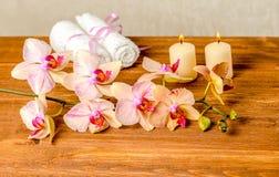 Красивая концепция курорта зацветая цветка орхидеи хворостины, phalaenops Стоковое фото RF