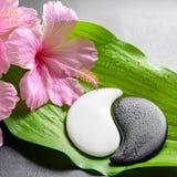 Красивая концепция курорта розовых цветков гибискуса и Yin-Yang s Стоковые Изображения