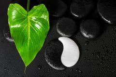 Красивая концепция курорта текстуры камня Yin-Yang и зеленых лист c Стоковые Фото