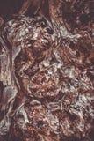 Красивая коричневая предпосылка фотографии макроса коры дерева стоковое изображение
