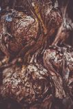 Красивая коричневая предпосылка фотографии макроса текстуры коры дерева стоковые изображения rf