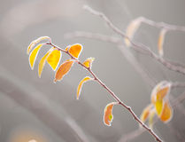 Красивая, который замерли ветвь дерева и яркие оранжевые листья Стоковая Фотография