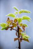 Красивая, который замерли ветвь дерева и яркие оранжевые листья Стоковое Изображение