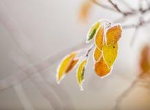 Красивая, который замерли ветвь дерева и яркие оранжевые листья Стоковое фото RF