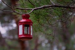 Красивая красная ветвь ели смертной казни через повешение фонарика сказки в лесе Стоковая Фотография RF
