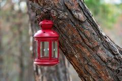 Красивая красная ветвь ели смертной казни через повешение фонарика сказки в лесе Стоковая Фотография