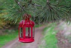 Красивая красная ветвь ели смертной казни через повешение фонарика сказки в лесе Стоковые Изображения