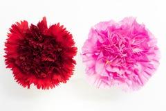 Красивая красная и розовая гвоздика стоковое изображение rf