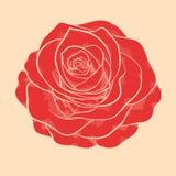 Красивая красная роза в нарисованном вручную графическом стиле в винтажных цветах иллюстрация вектора