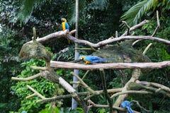 Красивая красочная ара parrots сидеть на ветви Стоковая Фотография