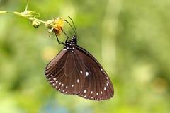 Красивая красочная бабочка в природе Стоковое фото RF