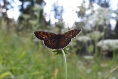 Красивая красочная бабочка на цветке Стоковое фото RF