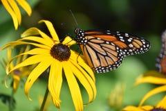 Красивая красочная бабочка Стоковое Изображение RF
