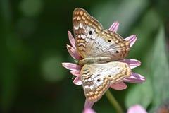 Красивая красочная бабочка Стоковое Фото