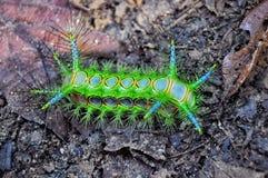 Красивая красочная гусеница стоковое изображение rf
