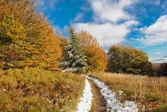 Красивая красочная листва в осени Стоковые Фотографии RF
