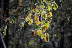 Красивая красочная, который замерли листва в осени Стоковые Изображения