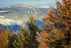Красивая красочная, который замерли листва в осени Стоковые Фотографии RF