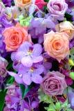 Красивая красочная предпосылка розы и цветка Стоковое фото RF