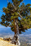 Красивая красочная природа Стоковое Изображение RF