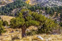 Красивая красочная природа Стоковое Фото