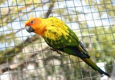 Красивая красочная птица попугая Стоковое Изображение