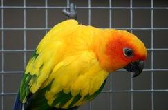 Красивая красочная птица попугая Стоковые Фото
